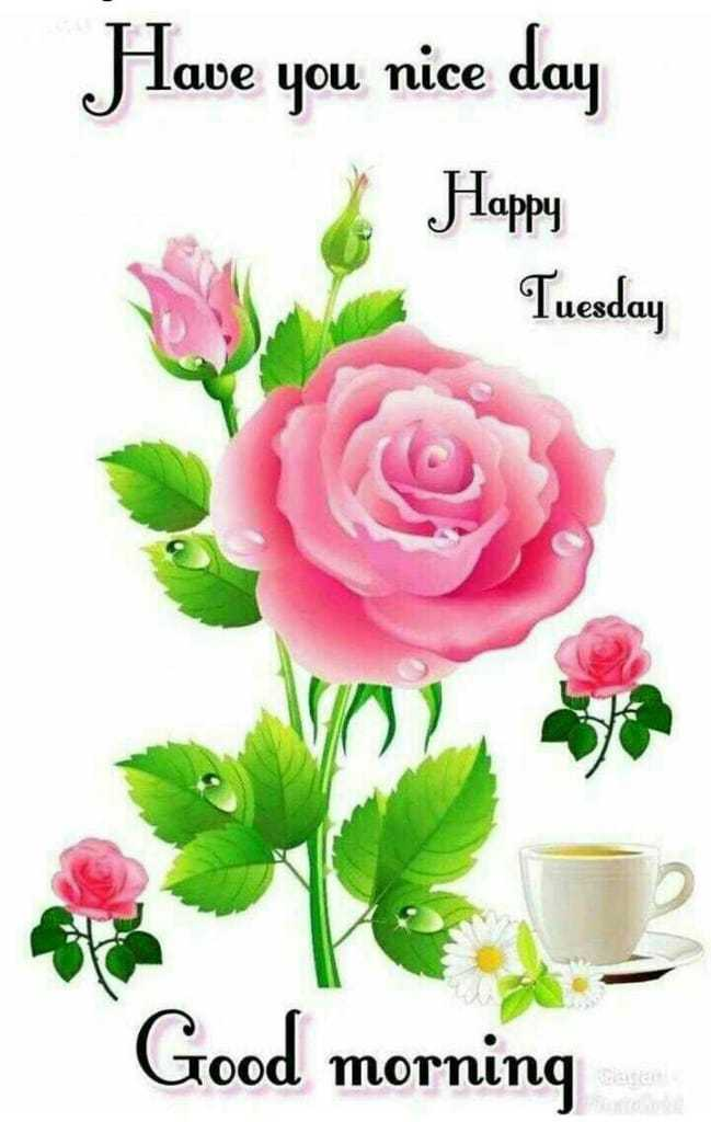 🌞Good Morning🌞 - Have you nice day Happy Tuesday Good morning  - ShareChat