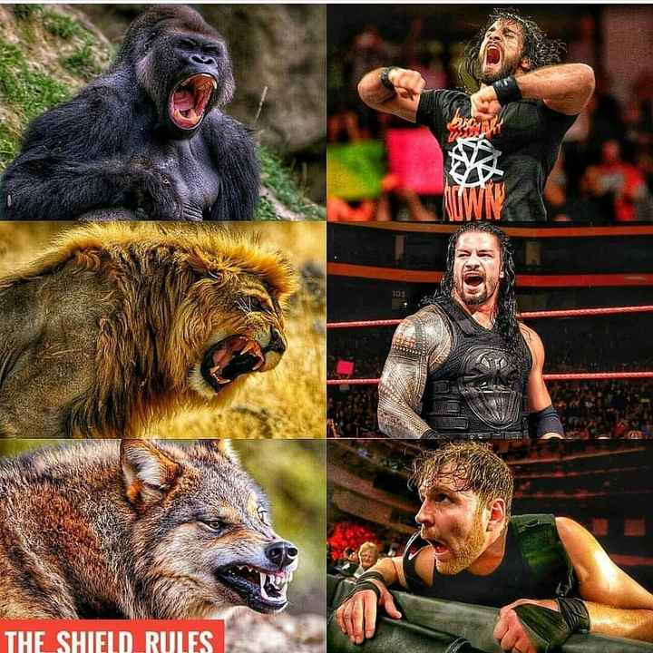 🥊WWE - THE SHIELD RULES  - ShareChat